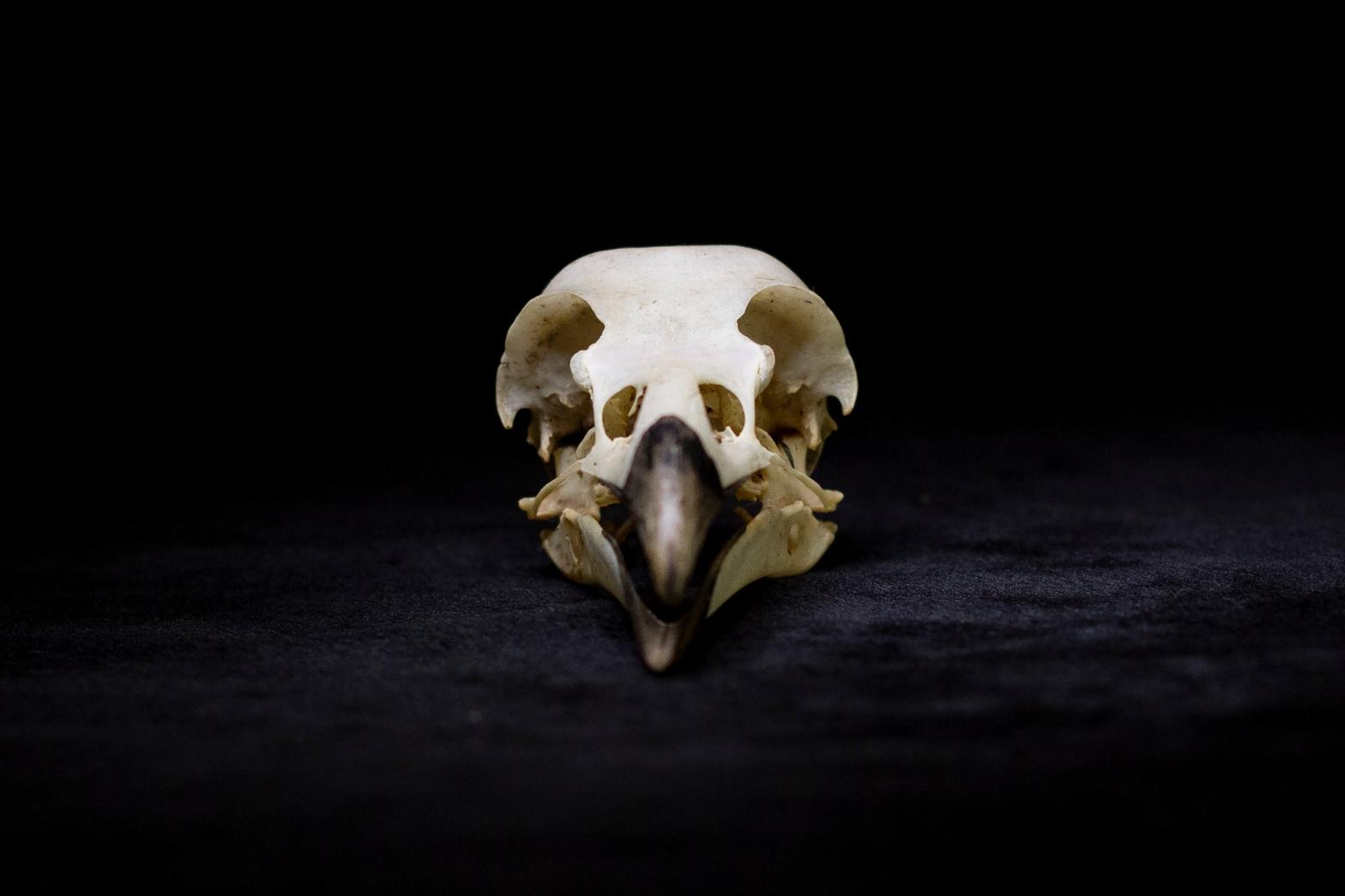 Eye of the Corvus by Kim V. Goldsmith