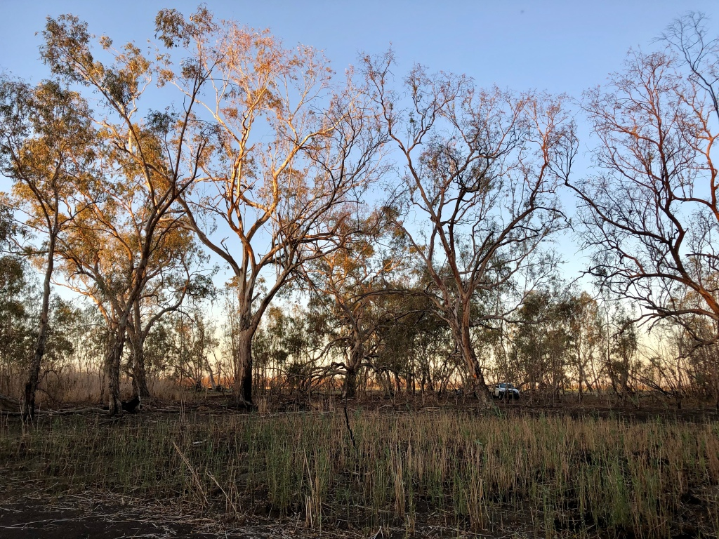 """River Red Gum forest and reeds at """"Burrima"""""""