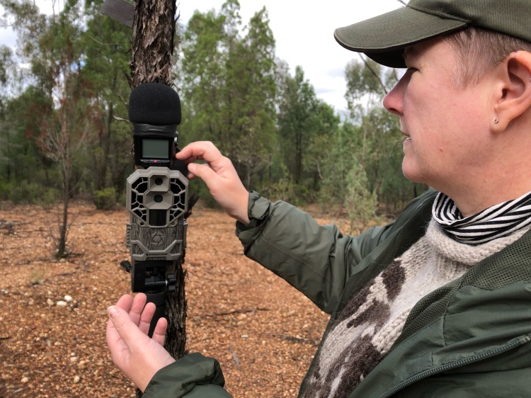 Setting up camera trap with ZOOM H2n mounted on top