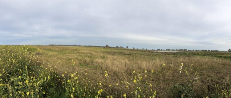 Looking towards the southern part of the Marshes