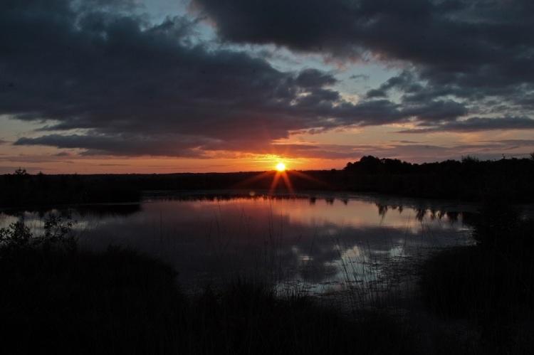 Whixall Moss UK at dawn