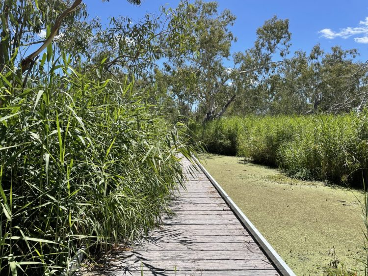 Burrima boardwalk